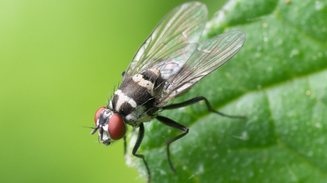 Home pest control can be used against critters such as bugs, flies, spiders and many more